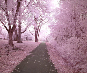 cherry blossom, photography, and vintage image