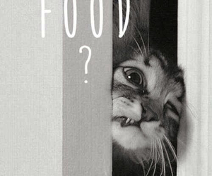 boy, cat, and food image