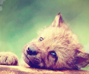 wolf, adorable, and cute image