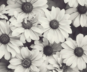 flowers, black and white, and white image
