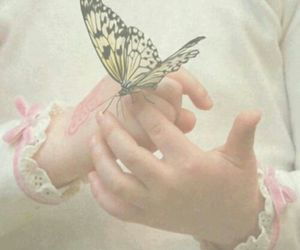 butterfly, photography, and beauty image