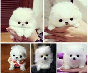 *-*, dog, and white image