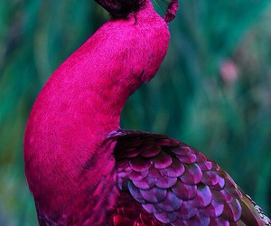 pink, animal, and bird image
