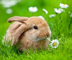 spring, cute, and animal image