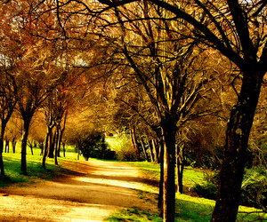 colors, park, and alberi image