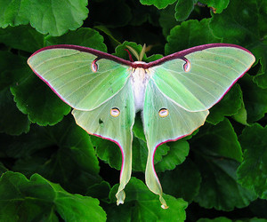 beautiful, butterfly, and county image