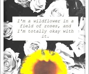 roses and wildflower image