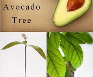 avocado, diy, and grow image