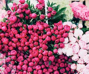 flowers, luxury, and girl image