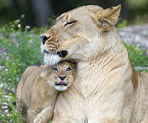 animals, cuddle, and look image