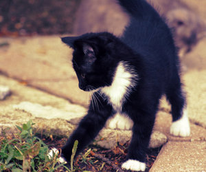 black, cat, and nature image