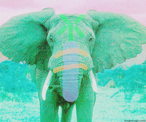 animal, awesome, and color image