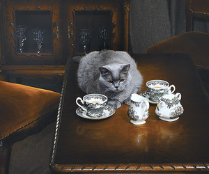 cat, cofee, and grey image
