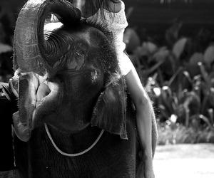 elephant, kendall jenner, and jenner image