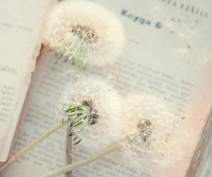book, dandelion, and vintage image
