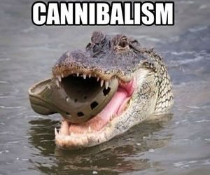 funny, cannibalism, and crocs image