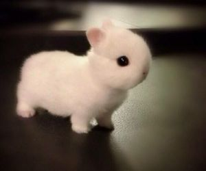 animal, cute animals, and rabbit image