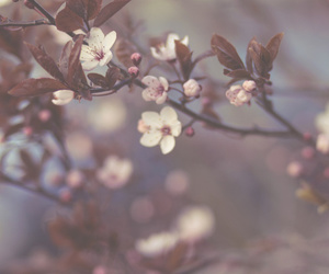 bokeh, cherry blossom, and floral image