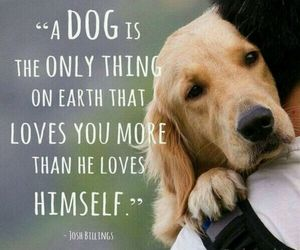 dog, love, and quotes image