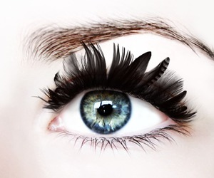 eyes, blue, and feather image