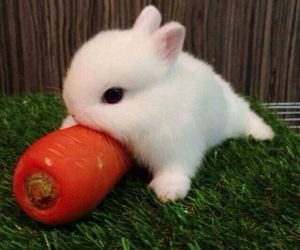 bunny, cute, and carrot image