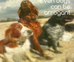 animal, quote, and dog image