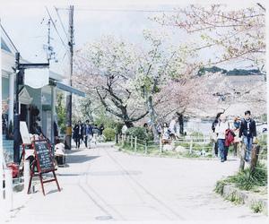 japan, sakura, and hanami image