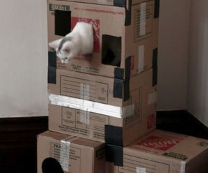 funny and this is a long cat ... image