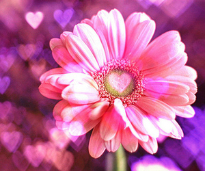flowers, pink, and heart image