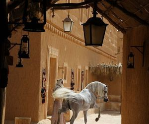 arabian, stallion, and om el arab image