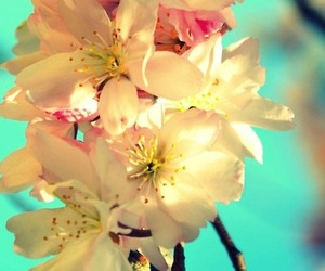 bright, cherry blossom, and colourful image