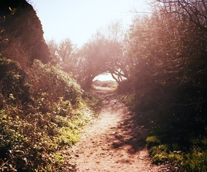 light, nature, and path image