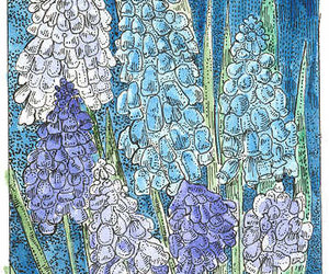drawing, spring flowers, and blue and purple image