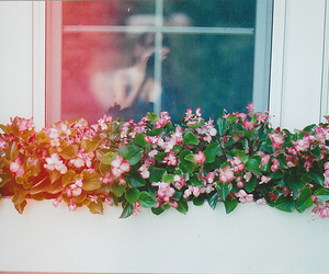 flowers, window, and photography image