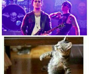 cat, funny, and m shadows image