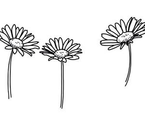 transparent, daisy, and flowers image