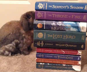 books, brown, and bunny image