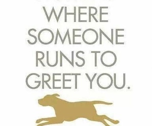dog, quote, and golden image