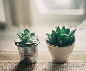 film, green, and succulents image
