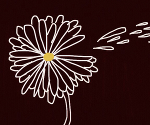 background, daisy, and floral image