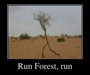 forest, funny, and lol image