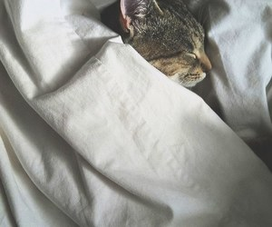 bed and cat image