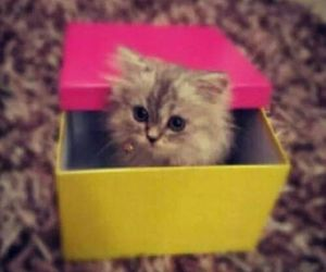 box, cute, and love image