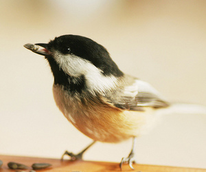 bird, animal, and hipster image