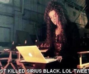 harry potter, bellatrix, and funny image