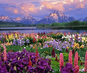 beautiful, flowers, and mountain image