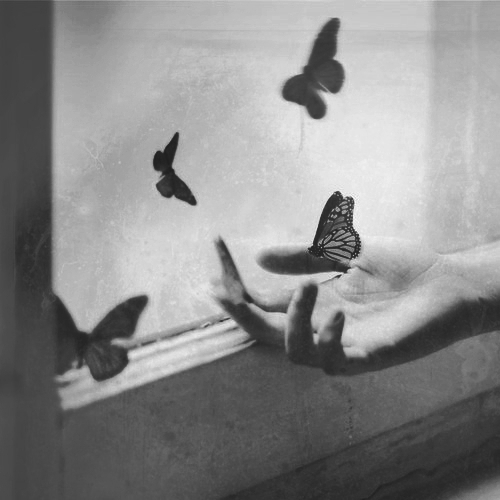 black and white, butterfly, and grunge image