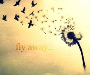 fly, bird, and fly away image