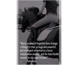 horses, quote, and rider image