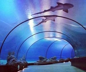 aquarium, sharks, and water image